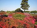 TsutsujiParkTatebayashi20100502.jpg