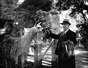 Melbourne Zoo - The President of the Zoological Board, feeding a llama in 1937