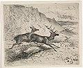 Twee lopende herten, RP-P-1913-3147.jpg