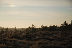 Morning in Mūša Upland Bog
