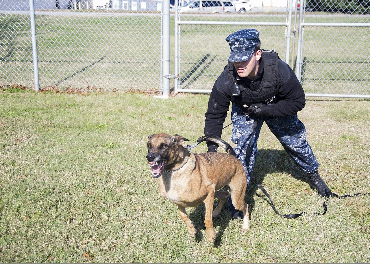 Image Result For Norfolk Dog Training