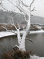 Ukraine Irpen 2010. First snow. River Irpen 2.jpg