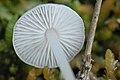 Unidentified.fungus2.-.lindsey.jpg
