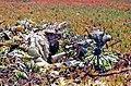 United States Navy SEALs 464.jpg