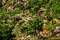 Végétation saxicole à Tanguiéta.jpg