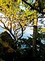 Vancouver Island (9290777632).jpg