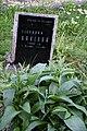 Veselí-evangelický-hřbitov-komplet2019-032.jpg