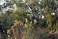 Victoria Falls 2012 05 23 1389 (7421829900).jpg