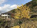 View near Hikosan Station.jpg