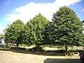 Vigeville - arbres républicains (01).jpg