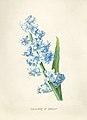 Vintage Flower illustration by Pierre-Joseph Redouté, digitally enhanced by rawpixel 07.jpg