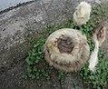 Viscacha-Tasse, -Untertasse, -Ei, -Eierbecher und -Kaffeelöffel (3).jpg