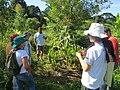 Visita Agrofloresta da Escola Latinoamericana de Agroecologia (ELAA).jpg