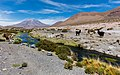Volcán Paniri, Chile, 2016-02-09, DD 20.JPG