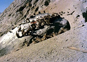 Sky burial - Vultures feeding on cut pieces of body at a 1985 sky burial in Lhasa, Tibet