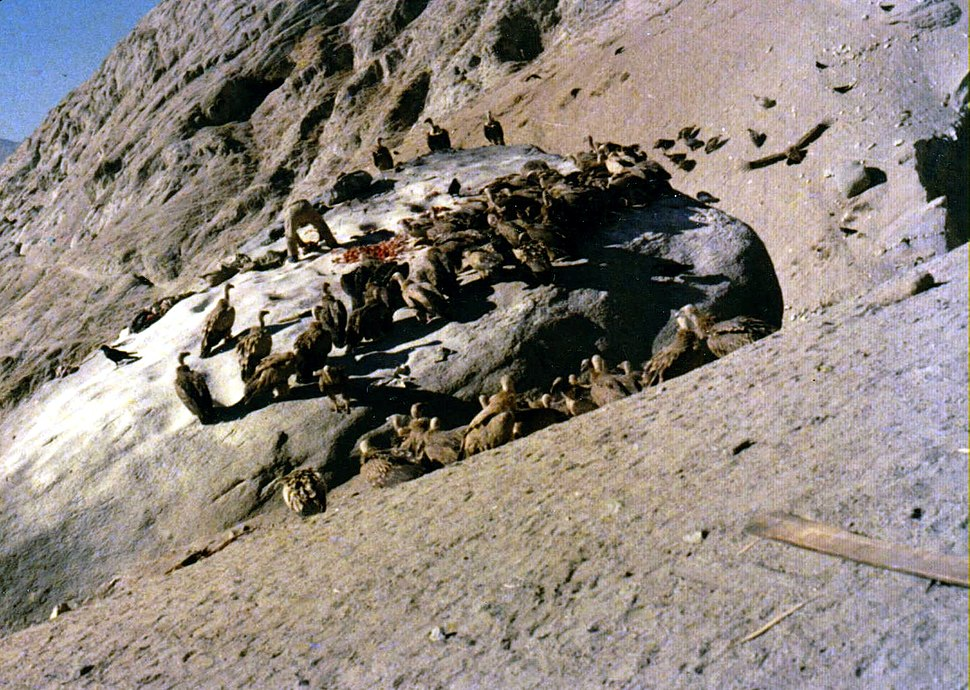 Vultures on Lhasa sky burial rock 1