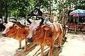 W Củ Chi Mô hình xe bò ở địa đạo Củ Chi.JPG