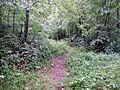 Wanderweg - panoramio (117).jpg