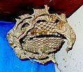 Wasp nest. Vespa vulgaris. Common Wasp. - Flickr - gailhampshire.jpg