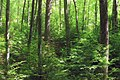 West Branch Research and Demonstration Forest (25) (27991368852).jpg
