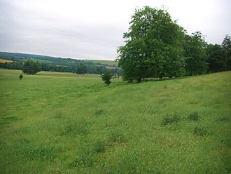 Lynchet - The slope of a prehistoric lynchet at West Dean, West Sussex