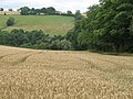 Wheatfield, Swainhill Dingle - geograph.org.uk - 1448165.jpg