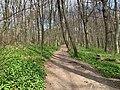 Wiener Wald 18 52 51 608000.jpeg