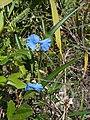 Wild Flowers - panoramio (6).jpg