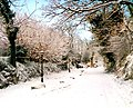 Winter lane, St. Tinney Farm - geograph.org.uk - 233029.jpg