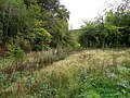 Woodland, Rhodfa'r Ystad - geograph.org.uk - 2082774.jpg