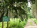 Woodland Walk on the Albury Estate - geograph.org.uk - 460873.jpg
