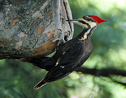 Woodpecker 20040529 151837 1c.jpeg