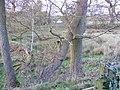 Wooley Pools - geograph.org.uk - 1603400.jpg