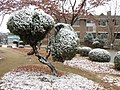 Yeungnam University Campus in Winter.jpg