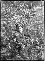 Young Moslem of Nablus among the almond blossoms of early spring (Frank Hurley) (9714557688).jpg