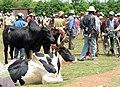 Zébus de Madagascar 01.jpg