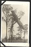 """Away up a stump""- photograph of an aircraft caught in the branches of a tree. (7980834254).jpg"