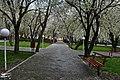 (((مناظر پارک ملت مراغه))) - panoramio.jpg