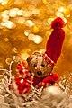 (36-365) Christmas bokeh (5247666522).jpg
