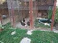 Állatkert (zoo) - panoramio (1).jpg