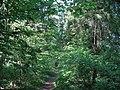 Белорусские джунгли - panoramio.jpg