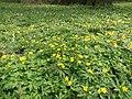 Ботанічний сад, квітень.jpg