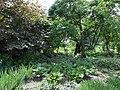 Ботанічний сад ДНУ 46.JPG