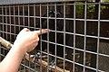 Ворон, живущий на Ррейтарской, 9 любит, когда его гладят.JPG