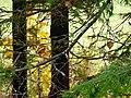 В лесу - panoramio (20).jpg