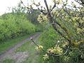 Дендрологічний парк 257.jpg