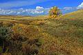 Дерево у подножья холма - panoramio.jpg
