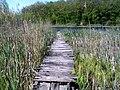 Міст до Чорного озера (Чорнолісся).jpg