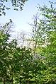 Наводницкий парк в Киеве. Фото 24.jpg