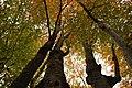 Осінь в горах.JPG